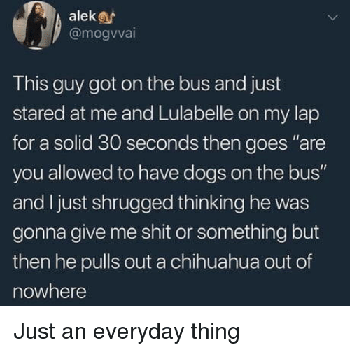 "Chihuahua, Dogs, and Shit: aleke  @mogvvai  This guy got on the bus and just  stared at me and Lulabelle on my lap  for a solid 30 seconds then goes ""are  you allowed to have dogs on the bus""  and I just shrugged thinking he was  gonna give me shit or something but  then he pulls out a chihuahua out of  nowhere Just an everyday thing"