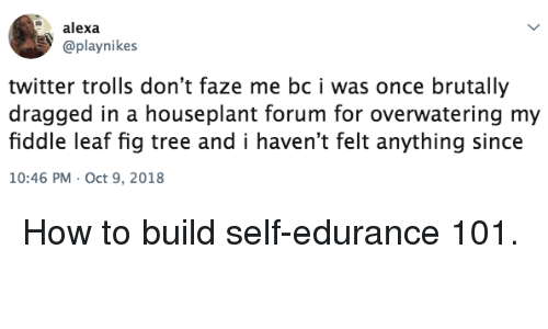 trolls: alexa  @playnikes  twitter trolls don't faze me bc i was once brutally  dragged in a houseplant forum for overwatering my  fiddle leaf fig tree and i haven't felt anything since  10:46 PM Oct 9, 2018 How to build self-edurance 101.