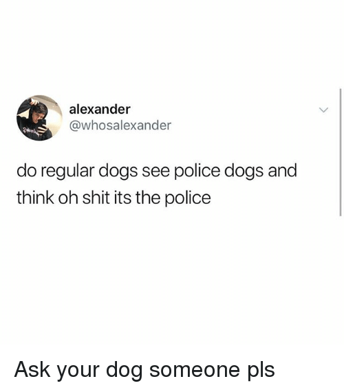 Dogs, Memes, and Police: alexander  @whosalexander  do regular dogs see police dogs and  think oh shit its the police Ask your dog someone pls