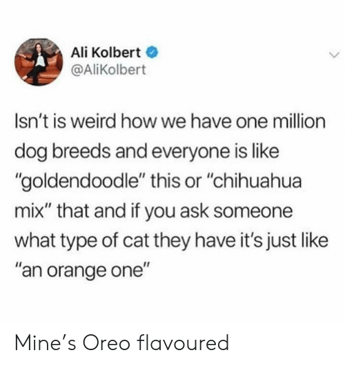 """Ali: Ali Kolbert  @AliKolbert  Isn't is weird how we have one million  dog breeds and everyone is like  """"goldendoodle"""" this or """"chihuahua  mix"""" that and if you ask someone  what type of cat they have it's just like  """"an orange one"""" Mine's Oreo flavoured"""