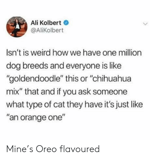 """Ali: Ali Kolbert  @AliKolbert  Isn't is weird howwe have one million  dog breeds and everyone is like  """"goldendoodle"""" this or """"chihuahua  mix"""" that and if you ask someone  what type of cat they have it's just like  """"an orange one"""" Mine's Oreo flavoured"""