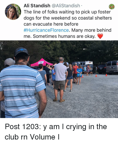 Ali, Club, and Crying: Ali Standish @AliStandish  The line of folks waiting to pick up foster  dogs for the weekend so coastal shelters  can evacuate here before  #HurricanceFlorence. Many more behind  me. Sometimes humans are okay. Post 1203: y am I crying in the club rn Volume I