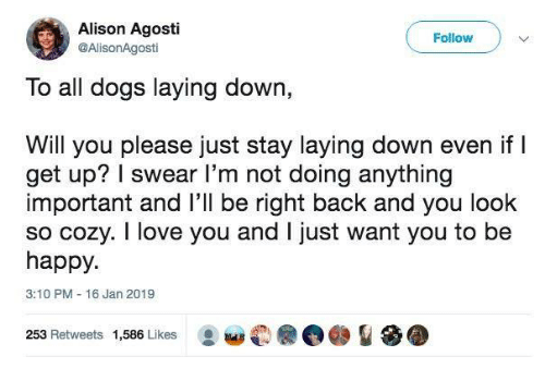 Dank, Dogs, and Love: Alison Agosti  @AlisonAgosti  Follow  To all dogs laying down,  Will you please just stay laying down even if l  get up? I swear l'm not doing anything  important and l'll be right back and you look  so cozy. I love you and I just want you to be  happy.  3:10 PM 16 Jan 2019  253 Retweets 1,586 Likes