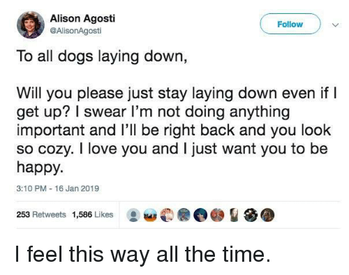 Dogs, Love, and I Love You: Alison Agosti  @AlisonAgosti  Follow  To all dogs laying down,  Will you please just stay laying down even ifI  get up? I swear l'm not doing anything  important and l'll be right back and you look  so cozy. I love you and I just want you to be  happy.  3:10 PM 16 Jan 2019  253 Retweets 1,586 Likes I feel this way all the time.