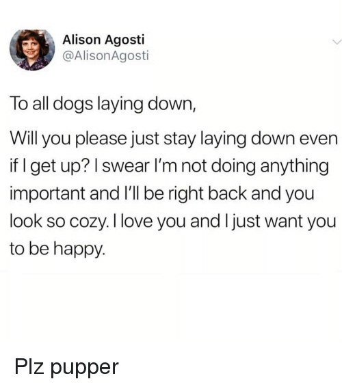 Dogs, Love, and I Love You: Alison Agosti  @AlisonAgosti  To all dogs laying down,  Will you please just stay laying down even  if I get up? I swear l'm not doing anything  important and l'll be right back and you  look so cozy. I love you and Ijust want you  to be happy Plz pupper