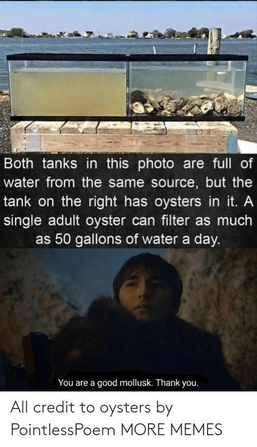 Credit: All credit to oysters by PointlessPoem MORE MEMES