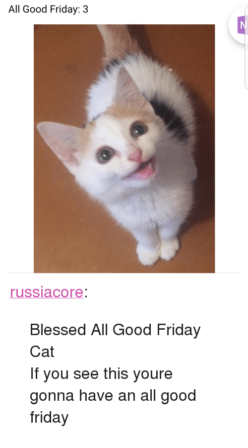 "Blessed, Friday, and Tumblr: All Good Friday: 3 <p><a href=""http://russiacore.tumblr.com/post/170690666112/blessed-all-good-friday-cat-if-you-see-this-youre"" class=""tumblr_blog"">russiacore</a>:</p><blockquote><p>Blessed All Good Friday Cat <br/> If you see this youre gonna have an all good friday</p></blockquote>"