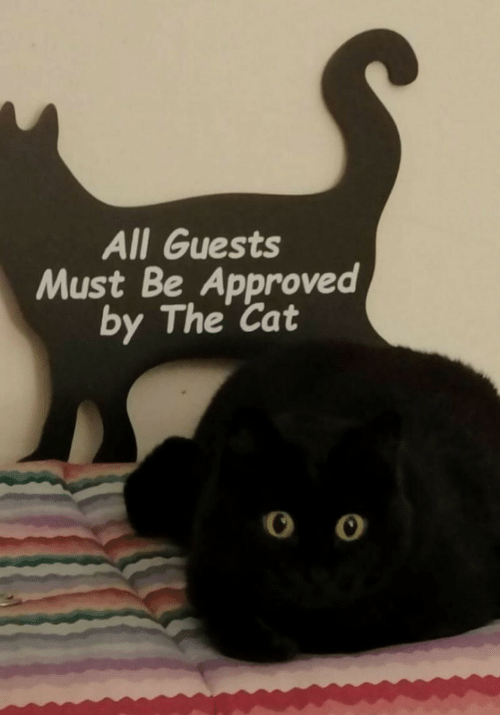 Approved, Cat, and All: All Guests  Must Be Approved  by The Cat