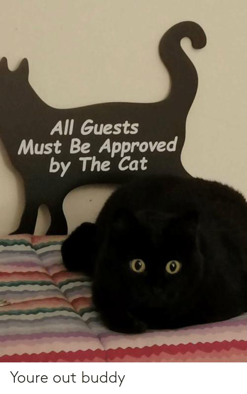 Approved, Cat, and All: All Guests  Must Be Approved  by The Cat Youre out buddy