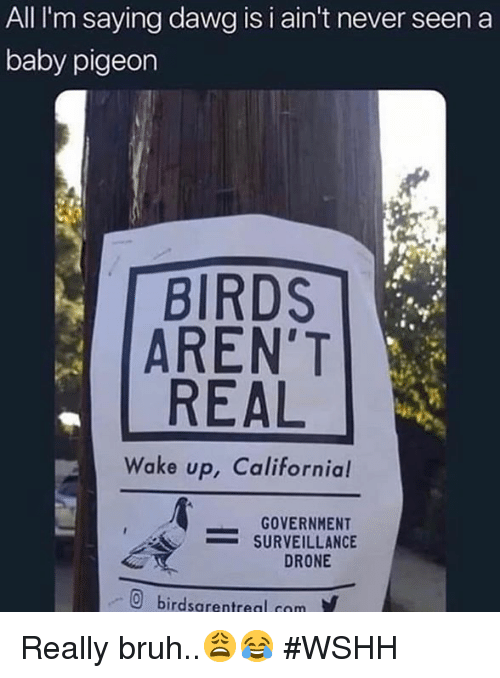Bruh, Drone, and Wshh: All  I'm  saying  dawg  is  i  ain't  never  seen  a  baby pigeon  BIRDS  AREN'T  REAL  Wake up, Californial  -GOVERNMENT  -SURVEILLANCE  DRONE  回  birdsarentreal com  y Really bruh..😩😂 #WSHH