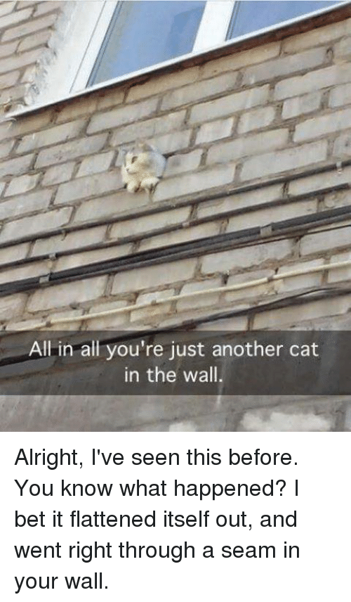I Bet, Memes, and Alright: All in all you're just another cat  in the wall, Alright, I've seen this before. You know what happened?  I bet it flattened itself out, and went right through a seam in your wall.