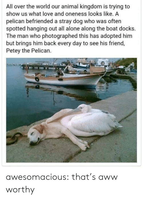 Being Alone, Aww, and Love: All over the world our animal kingdom is trying to  show us what love and oneness looks like, A  pelican befriended a stray dog who was often  spotted hanging out all alone along the boat docks.  The man who photographed this has adopted him  but brings him back every day to see his friend,  Petey the Pelican. awesomacious:  that's aww worthy