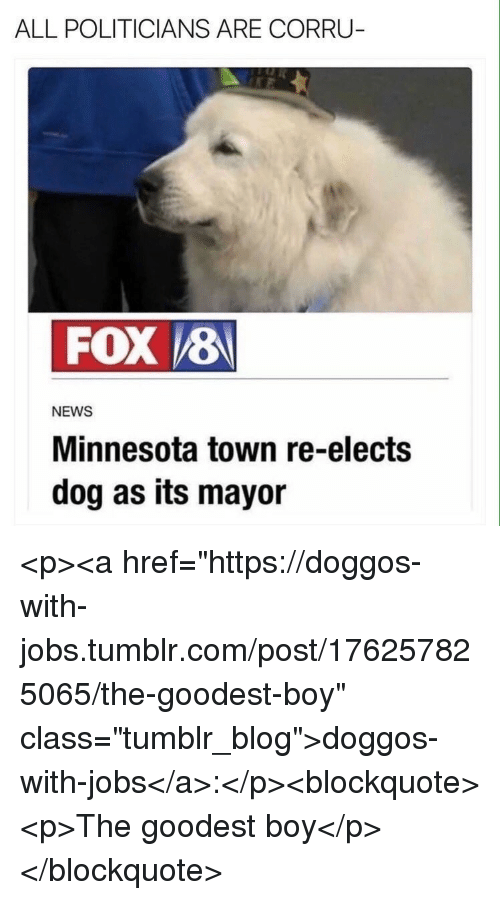 """News, Tumblr, and Blog: ALL POLITICIANS ARE CORRU  FOX 8  NEWS  Minnesota town re-elects  dog as its mayor <p><a href=""""https://doggos-with-jobs.tumblr.com/post/176257825065/the-goodest-boy"""" class=""""tumblr_blog"""">doggos-with-jobs</a>:</p><blockquote><p>The goodest boy</p></blockquote>"""