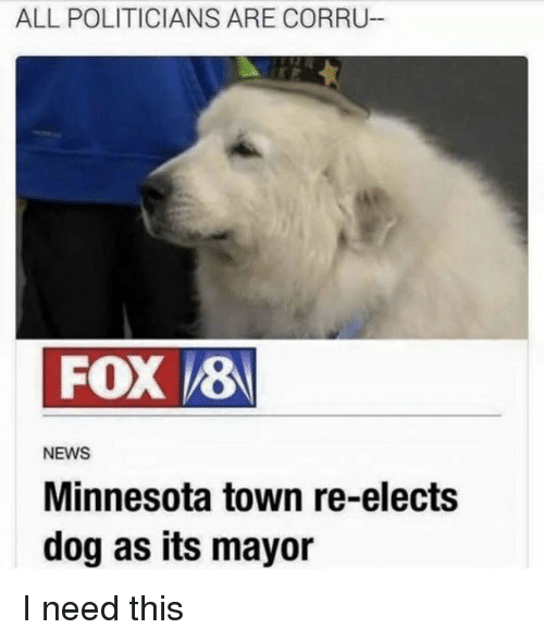 News, Minnesota, and Politicians: ALL POLITICIANS ARE CORRU-  FOX 8  NEWS  Minnesota town re-elects  dog as its mayor I need this