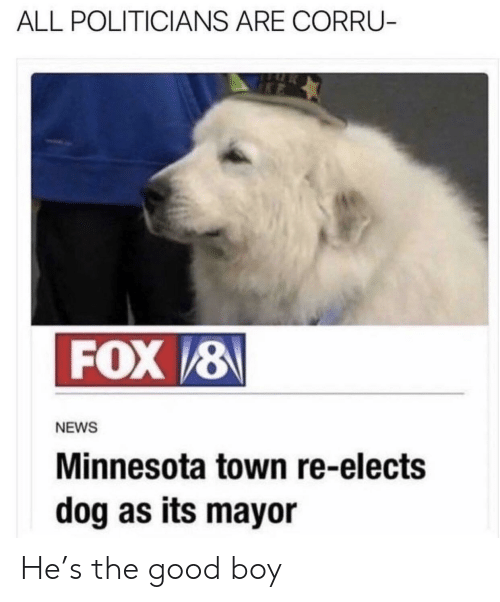 News, Good, and Minnesota: ALL POLITICIANS ARE CORRU-  FOX 8  NEWS  Minnesota town re-elects  dog as its mayor He's the good boy