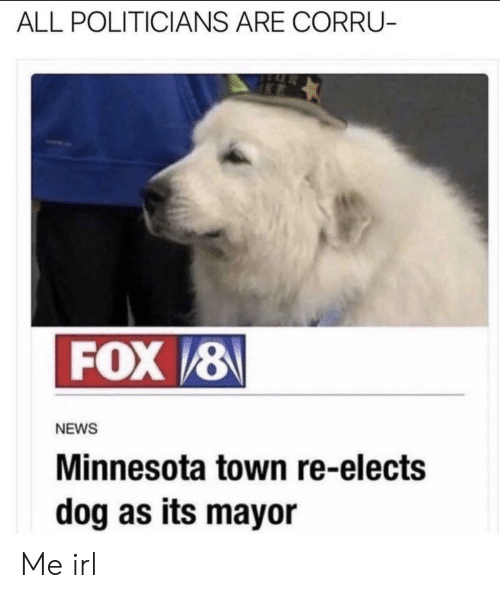 News, Minnesota, and Politicians: ALL POLITICIANS ARE CORRU-  FOX/8  NEWS  Minnesota town re-elects  dog as its mayor Me irl