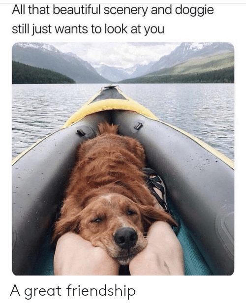 Beautiful, All That, and Friendship: All that beautiful scenery and doggie  still just wants to look at you A great friendship