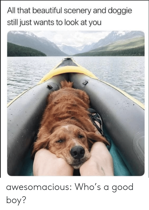 Beautiful, Tumblr, and Blog: All that beautiful scenery and doggie  still just wants to look at you awesomacious:  Who's a good boy?