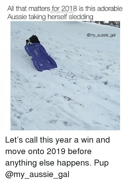 sledding: All that matters for 2018 is this adorable  Aussie taking herself sledding  @my aussie_gal Let's call this year a win and move onto 2019 before anything else happens. Pup @my_aussie_gal