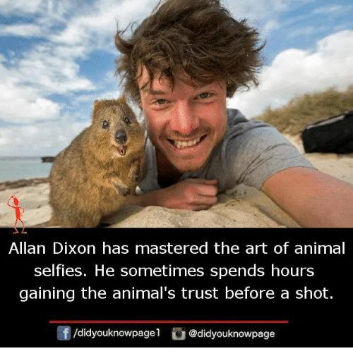 Animals, Memes, and Animal: Allan Dixon has mastered the art of animal  selfies. He sometimes spends hours  gaining the animal's trust before a shot.  /didyouknowpagel @didyouknowpage