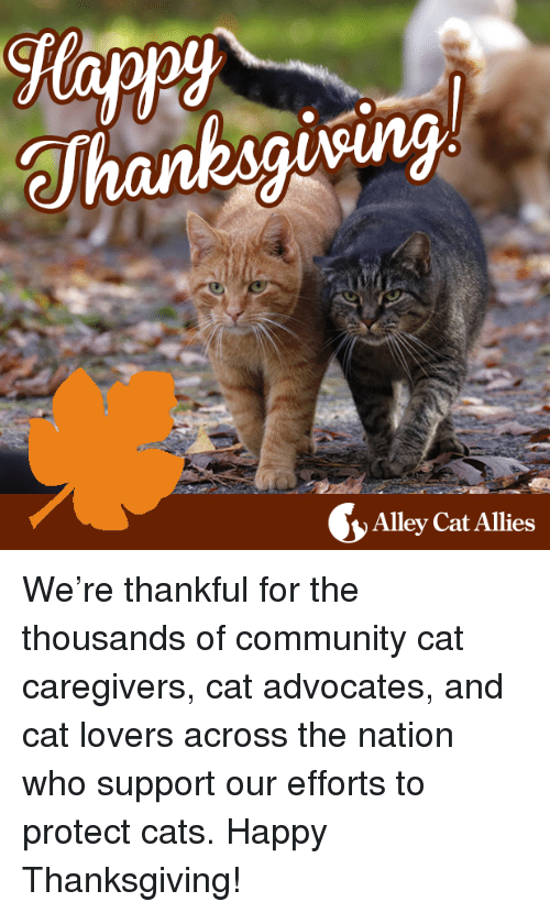 Community, Memes, and Ally: Alley Cat Allies We're thankful for the thousands of community cat caregivers, cat advocates, and cat lovers across the nation who support our efforts to protect cats. Happy Thanksgiving!
