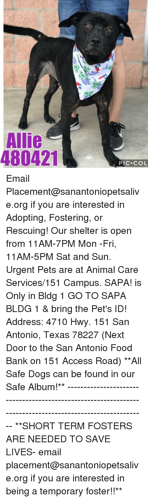 Dogs, Food, and Memes: Allie  480421  PIC COL Email Placement@sanantoniopetsalive.org if you are interested in Adopting, Fostering, or Rescuing!  Our shelter is open from 11AM-7PM Mon -Fri, 11AM-5PM Sat and Sun.  Urgent Pets are at Animal Care Services/151 Campus. SAPA! is Only in Bldg 1 GO TO SAPA BLDG 1 & bring the Pet's ID! Address: 4710 Hwy. 151 San Antonio, Texas 78227 (Next Door to the San Antonio Food Bank on 151 Access Road)  **All Safe Dogs can be found in our Safe Album!** ---------------------------------------------------------------------------------------------------------- **SHORT TERM FOSTERS ARE NEEDED TO SAVE LIVES- email placement@sanantoniopetsalive.org if you are interested in being a temporary foster!!**