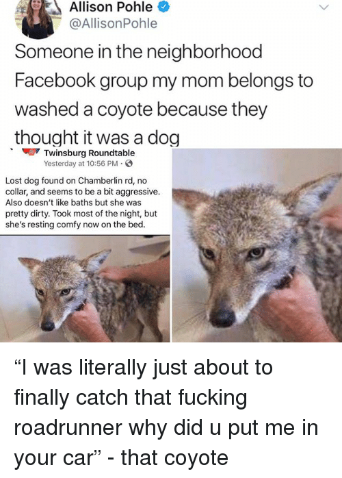 "Facebook, Fucking, and Memes: Allison Pohle  @AllisonPohle  Someone in the neighborhood  Facebook group my mom belongs to  washed a coyote because they  thought it was a dog  Twinsburg Roundtable  Yesterday at 10:56 PM  Lost dog found on Chamberlin rd, no  collar, and seems to be a bit aggressive.  Also doesn't like baths but she was  pretty dirty. Took most of the night, but  she's resting comfy now on the bed. ""I was literally just about to finally catch that fucking roadrunner why did u put me in your car"" - that coyote"