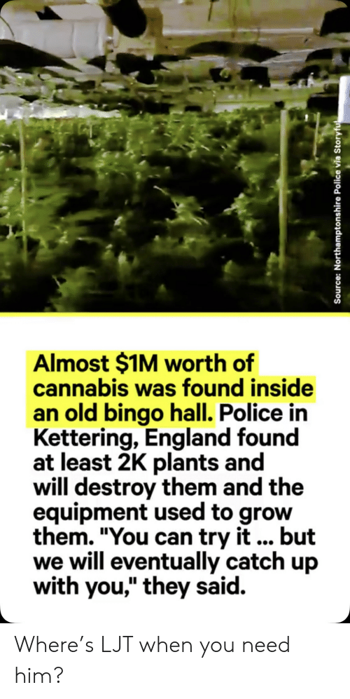 """England, Police, and Old: Almost $1M worth of  cannabis was found inside  an old bingo hall. Police in  Kettering, England found  at least 2K plants and  will destroy them and the  equipment used to grow  them. """"You can try it... but  we will eventually catch up  with you,"""" they said.  Source: Northamptonshire Police via Storyfu Where's LJT when you need him?"""