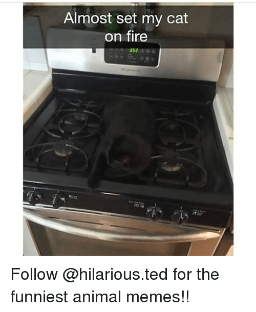 Memes, Ted, and 🤖: Almost set my cat  on fire Follow @hilarious.ted for the funniest animal memes!!