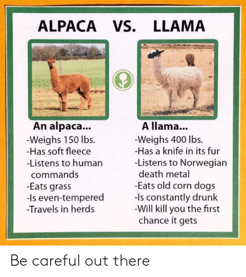 Dogs, Drunk, and Death: ALPACA VS. LLAMA  A llama...  Weighs 400 lbs.  -Has a knife in its fur  -Listens to Norwegian  death metal  -Eats old corn dogs  -Is constantly drunk  Will kill you the first  chance it gets  An alpaca...  Weighs 150 lbs.  -Has soft fleece  -Listens to human  commands  -Eats grass  -Is even-tempered  -Travels in her Be careful out there