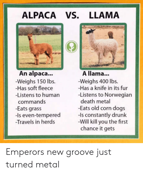 Dogs, Drunk, and Death: ALPACA VS. LLAMA  An alpaca..  -Weighs 150 lbs.  -Has soft fleece  -Listens to humarn  A llama...  -Weighs 400 lbs.  -Has a knife in its fur  -Listens to Norwegian  death metal  -Eats old corn dogs  commands  -Eats grass  -Is even-tempered ls constantly drunk  Travels in herds  -Will kill you the first  chance it gets Emperors new groove just turned metal