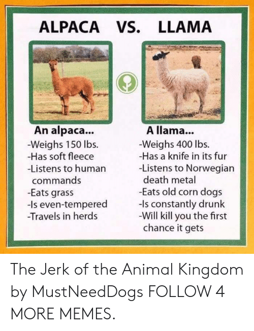 Dank, Dogs, and Drunk: ALPACA Vs. LLAMA  An alpaca...  Weighs 150 lbs.  -Has soft fleece  -Listens to human  A llama...  -Weighs 400 lbs.  -Has a knife in its fur  -Listens to Norwegian  death metal  -Eats old corn dogs  -Is constantly drunk  -Will kill you the first  chance it gets  commands  -Eats grass  even-tempered  -Travels in herds The Jerk of the Animal Kingdom by MustNeedDogs FOLLOW 4 MORE MEMES.