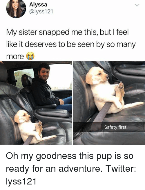 Memes, Twitter, and Pup: Alyssa  @lyss121  My sister snapped me this, but I feel  like it deserves to be seen by so many  more  Safety first! Oh my goodness this pup is so ready for an adventure. Twitter: lyss121