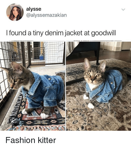 Fashion, Memes, and 🤖: alysse  @alyssemazakian  I found a tiny denim jacket at goodwill Fashion kitter