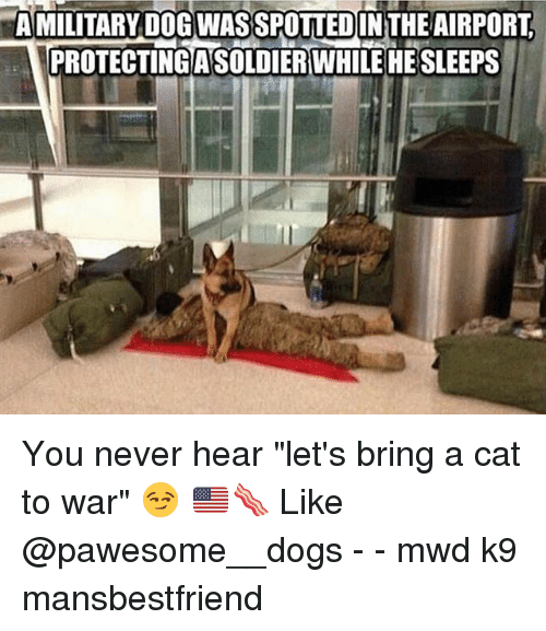 """Dogs, Memes, and Never: AMILITARY DOG WAS SPOTTEDINTHE AIRPORT  PROTECTINGASOLDIER WHILE HE SLEEPS You never hear """"let's bring a cat to war"""" 😏 🇺🇸🥓 Like @pawesome__dogs - - mwd k9 mansbestfriend"""