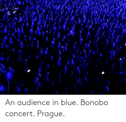 Prague: An audience in blue. Bonobo concert. Prague.