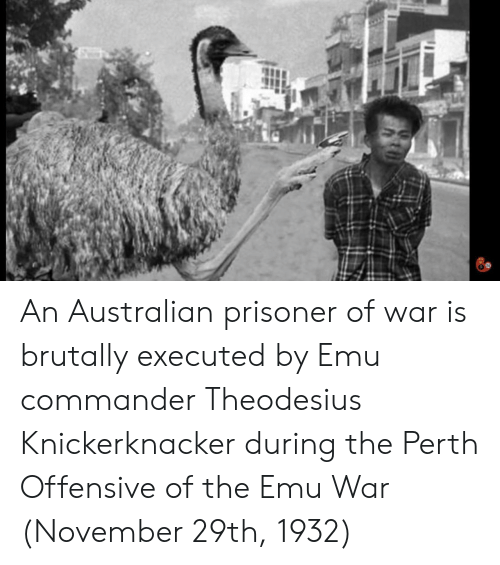 prisoner of war: An Australian prisoner of war is brutally executed by Emu commander Theodesius Knickerknacker during the Perth Offensive of the Emu War (November 29th, 1932)