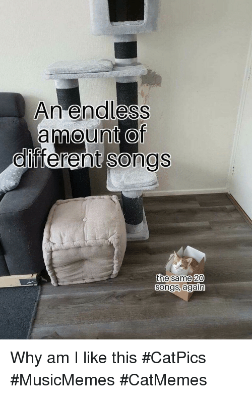 Songs, Why, and This: An end less  amount Of  ollfferen  t songs  the same 20  Songs, again Why am I like this #CatPics #MusicMemes #CatMemes