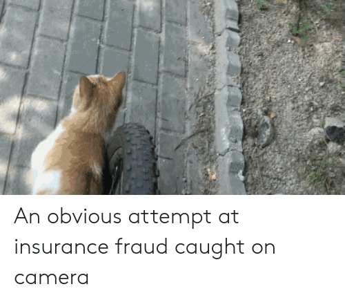 Camera, Insurance, and Fraud: An obvious attempt at insurance fraud caught on camera