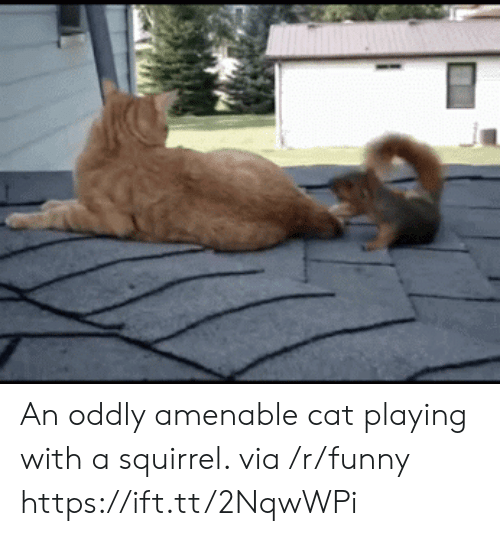 Funny, Squirrel, and Cat: An oddly amenable cat playing with a squirrel. via /r/funny https://ift.tt/2NqwWPi