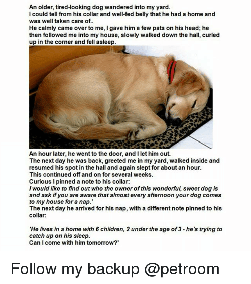 Children, Funny, and Head: An older, tired-looking dog wandered into my yard.  I could tell from his collar and well-fed belly that he had a home and  was well taken care of..  He calmly came over to me, I gave him a few pats on his head; he  then followed me into my house, slowly walked down the hall, curled  up in the corner and fell asleep.  An hour later, he went to the door, and I let him out.  The next day he was back, greeted me in my yard, walked inside and  resumed his spot in the hall and again slept for about an hour.  This continued off and on for several weeks  Curious I pinned a note to his collar:  I would like to find out who the owner of this wonderful, sweet dog is  and ask if you are aware that almost every afternoon your dog comes  to my house for a nap.  The next day he arrived for his nap, with a different note pinned to his  collar  'He lives in a home with 6 children, 2 under the age of3 he's trying to  catch up on his sleep.  Can I come with him tomorrow? Follow my backup @petroom