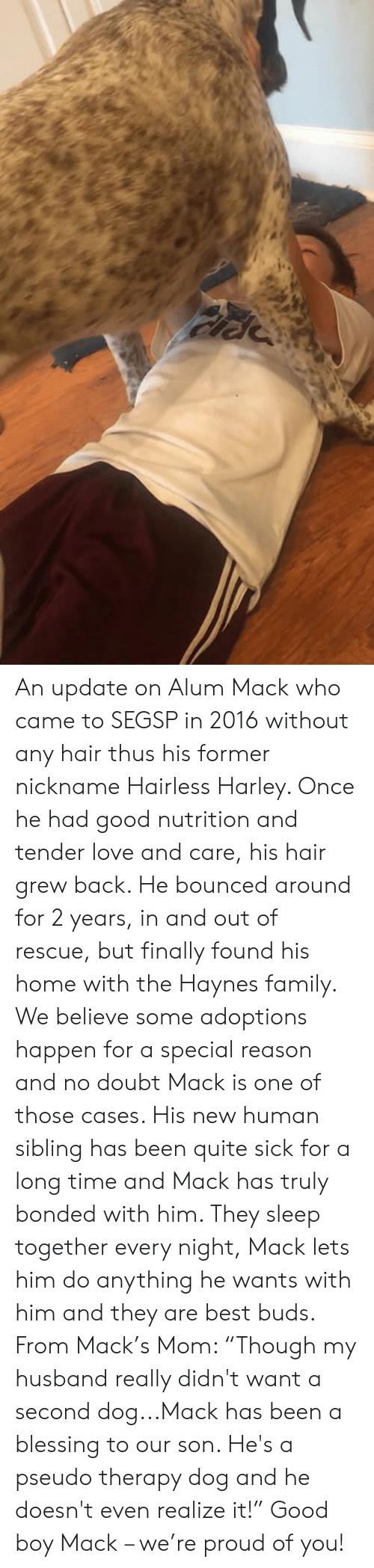 """Family, Love, and Memes: An update on Alum Mack who came to SEGSP in 2016 without any hair thus his former nickname Hairless Harley.  Once he had good nutrition and tender love and care, his hair grew back. He bounced around for 2 years, in and out of rescue, but finally found his home with the Haynes family.  We believe some adoptions happen for a special reason and no doubt Mack is one of those cases. His new human sibling has been quite sick for a long time and Mack has truly bonded with him. They sleep together every night, Mack lets him do anything he wants with him and they are best buds.  From Mack's Mom:  """"Though my husband really didn't want a second dog...Mack has been a blessing to our son.  He's a pseudo therapy dog and he doesn't even realize it!""""   Good boy Mack – we're proud of you!"""