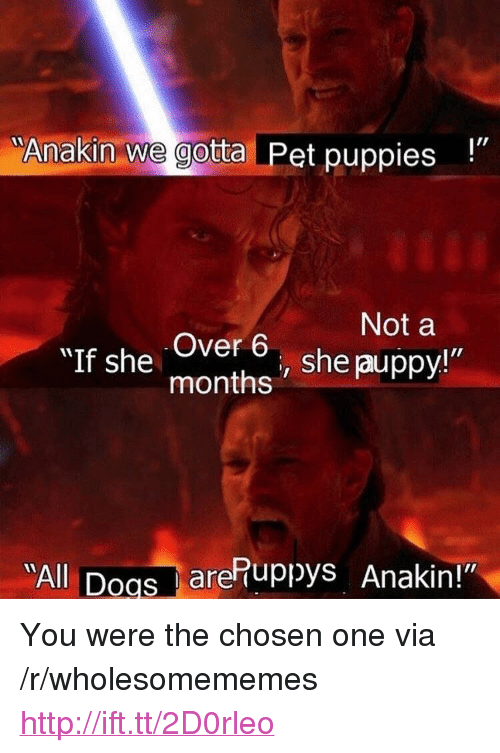 "Puppies, Http, and Pet: ""Anakin we gotta Pet puppies  Not a  Over 6, she auppy!""  months  ""AII  All Doas arePuppys Anakin!"" <p>You were the chosen one via /r/wholesomememes <a href=""http://ift.tt/2D0rleo"">http://ift.tt/2D0rleo</a></p>"