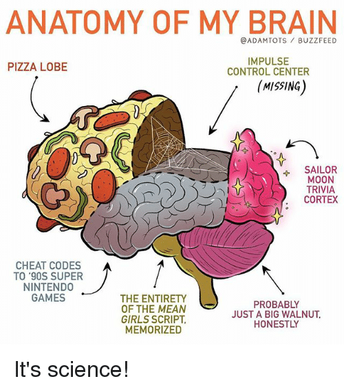 Girls, Memes, and Pizza: ANATOMY OF MY BRAIN  @ADAMTOTS BUZZFEED  IMPULSE  CONTROL CENTER  PIZZA LOBE  MISSING)  SAILOR  MOON  TRIVIA  CORTEX  CHEAT CODES  TO '90S SUPER  NINTEND0  GAMES  THE ENTIRETY  OF THE MEAN  GIRLS SCRIPT  MEMORIZED  PROBABLY  JUST A BIG WALNUT  HONESTLY It's science!