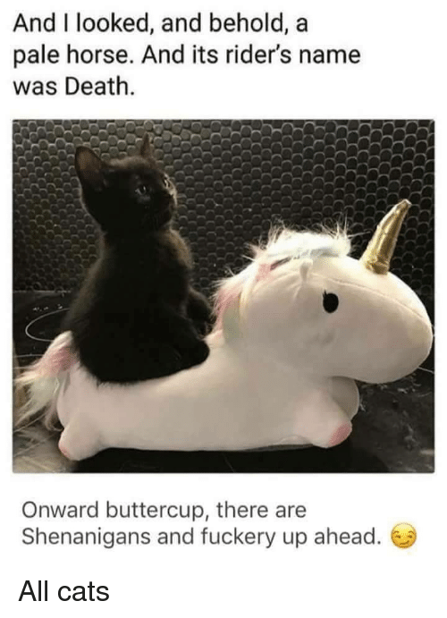Cats, Shenanigans, and Death: And I looked, and behold, a  pale horse. And its rider's name  was Death.  Onward buttercup, there are  Shenanigans and fuckery up ahead. All cats