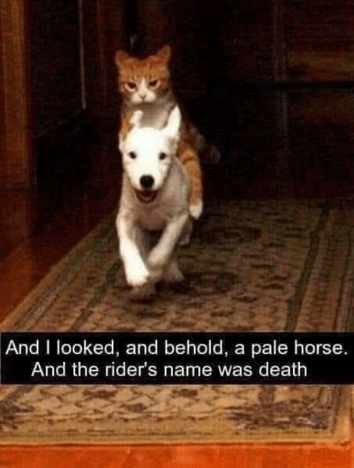 Death, Horse, and Name: And I looked, and behold, a pale horse.  And the rider's name was death