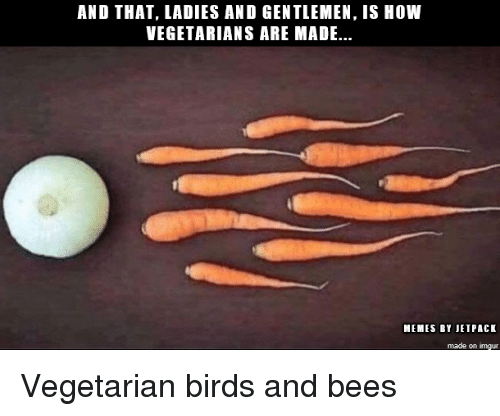 Memes, Birds, and Imgur: AND THAT, LADIES AND GENTLEMEN, IS HOW  VEGETARIANS ARE MADE..  MEMES BY JETPACK  made on imgur Vegetarian birds and bees