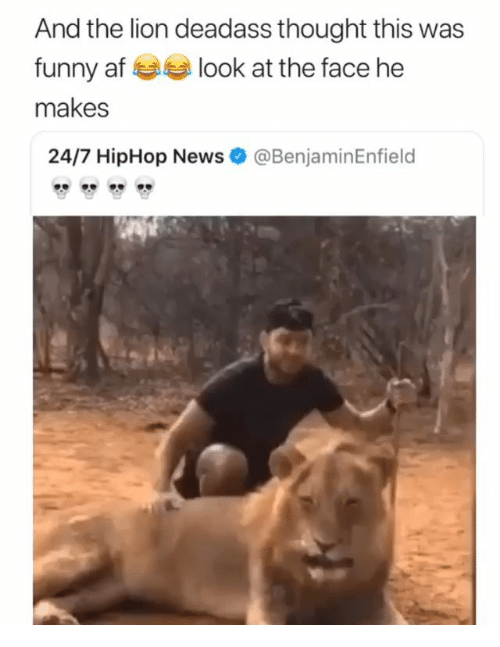 Af, Funny, and Memes: And the lion deadass thought this was  funny af look at the face he  makes  24/7 HipHop News  @BenjaminEnfield