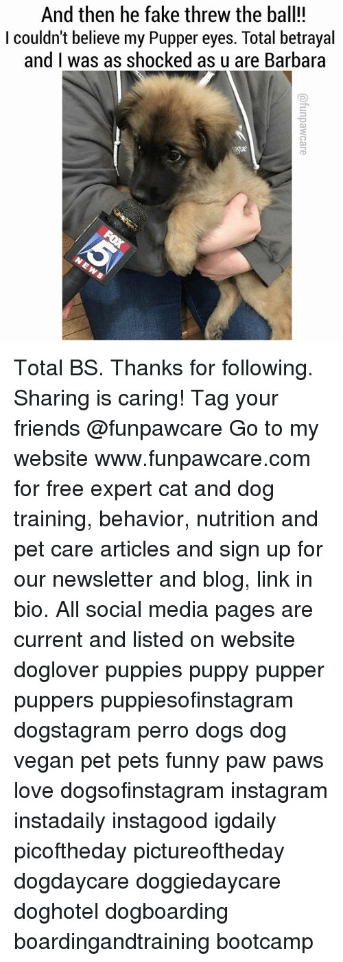 Dogs, Fake, and Friends: And then he fake threw the ball!!  I couldn't believe my Pupper eyes. Total betrayal  and I was as shocked as u are Barbara Total BS. Thanks for following. Sharing is caring! Tag your friends @funpawcare Go to my website www.funpawcare.com for free expert cat and dog training, behavior, nutrition and pet care articles and sign up for our newsletter and blog, link in bio. All social media pages are current and listed on website doglover puppies puppy pupper puppers puppiesofinstagram dogstagram perro dogs dog vegan pet pets funny paw paws love dogsofinstagram instagram instadaily instagood igdaily picoftheday pictureoftheday dogdaycare doggiedaycare doghotel dogboarding boardingandtraining bootcamp