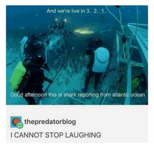 Shark, Good, and Live: And we're live in 3. 2.. 1..  Good afternoon this is shark reporting from atlantic ocean  thepredatorblog  I CANNOT STOP LAUGHING